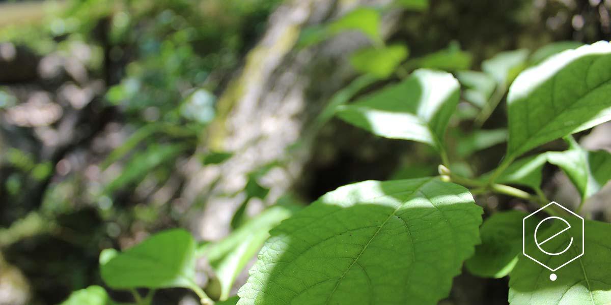 shady-woodland-10WEB