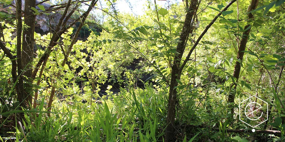 shady-woodland-9WEB
