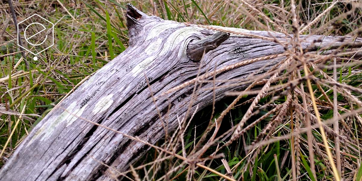 ghostwood-5
