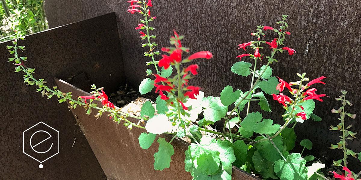 planter-3